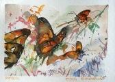 Borboletas monarcas, Goiânia, Brasil