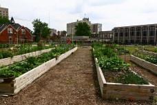 Detroit: ponto morto. Fazendas urbanas<br />Foto Michael Rozenbojm  [divulgação]