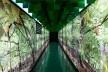 Núcleo floresta<br />Foto Leonardo Finotti