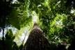 Floresta Amazônica<br />Foto Marcelo Camargo  [Agência Brasil]