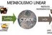 Modelo de metabolismo linear das cidades [Modificado de ROGERS, 2001, p. 31.]