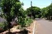 Cultivo de mandioca em uma calçada de Iguaraçu/PR [Acervo das autoras, 2009]