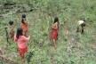 Comunidade Wajãpi, Amazônia <br />Foto divulgação  [Instituto de Pesquisa e Formação Indígena / Programa Wajãpi]