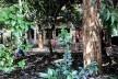 Vegetação e área permeável no futuro (talvez) Parque Augusta, São Paulo<br />Foto Abilio Guerra