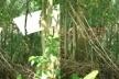 Húmus, simulações fotográficas. A ausência de moldura e a fixação mediante cabos tensionados, ancorados na terra e fixados nas árvores, dilui o contorno das placas, privilegiando os reflexos do solo