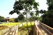 Parque Municipal Nair Bello, imagem da passarela com destaque para Embaúba, São Paulo SP Brasil, 2020. Secretaria Municipal do Verde e do Meio Ambiente<br />Foto divulgação  [Acervo SVMA/DIPO]
