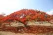 Uma grande árvore<br />Acervo dos autores, 2012