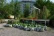 Pequeno jardim Prinzessinnengarten no coração de Berlim. <br />Foto Cecilia Herzog