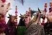 Festa Bumba meu boi, Maranhão<br />Foto Edgar Rocha  [Portal Iphan]