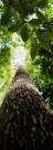 Contra o desmonte da governança socioambiental no Brasil