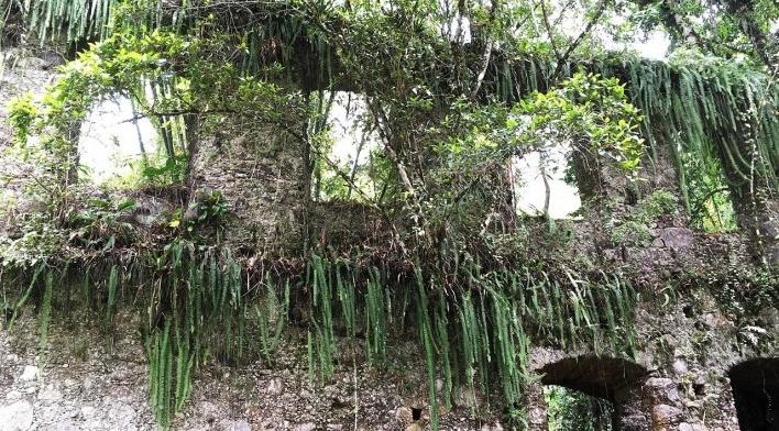Ruínas do Engenho da Lagoinha, vista interna do conjunto de vãos de janela, Ubatuba SP<br />Foto Thamara Gasch