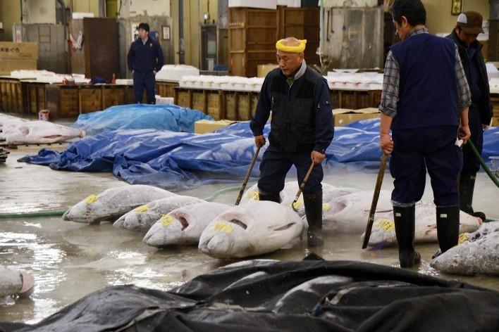 Mercado de peixe Tsukiji, alinhando os atuns do leilão, Tóquio<br />Foto Roberto Abramovich