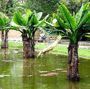 Jardim Botânico do Rio e Janeiro [Foto Eduardo Barra]