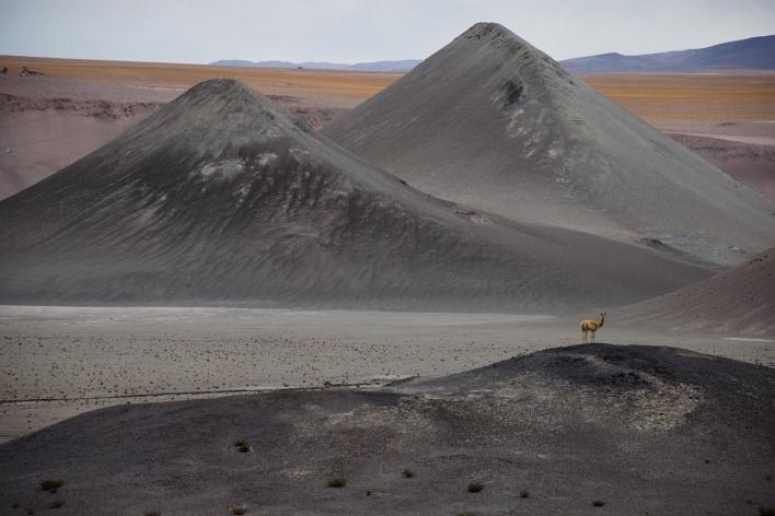 Vicunha no alto do morro, Chile<br />Foto José Tabacow