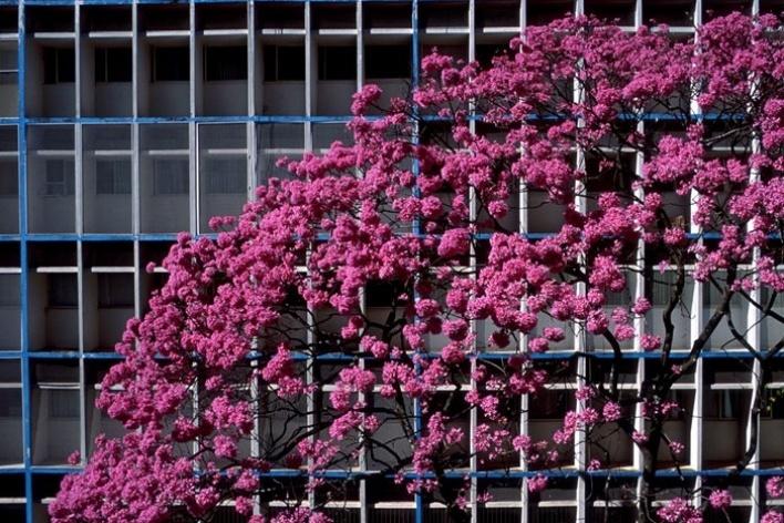 Ipê  bloco residencial sul, 2004<br />Foto Salomon Cytrynowicz