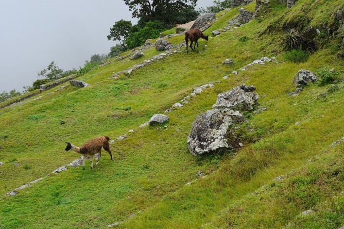 Macchu Picchu, Peru<br />Foto Juan Guerra