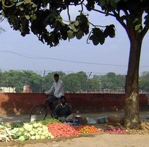 vendedor de legumes e frutas nas ruas de Chandigarh<br />Foto de Denise Teixeira e Luís Barbieri