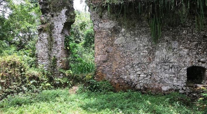 Ruínas do Engenho da Lagoinha, Ubatuba SP<br />Foto Thamara Gasch