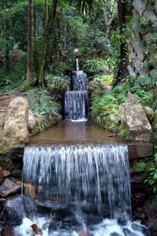 Grande cascata / Raízes tabulares do chichá / Deusa Tétis fonte Wallace