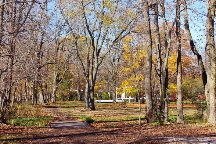 Vista de aproximação à Farnsworth House<br />Foto Sarah Suassuna