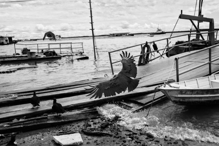 Urubus sobrevoam o porto de Manaus<br />Foto Tommaso Protti, 2017  [Série Terra Vermelha]