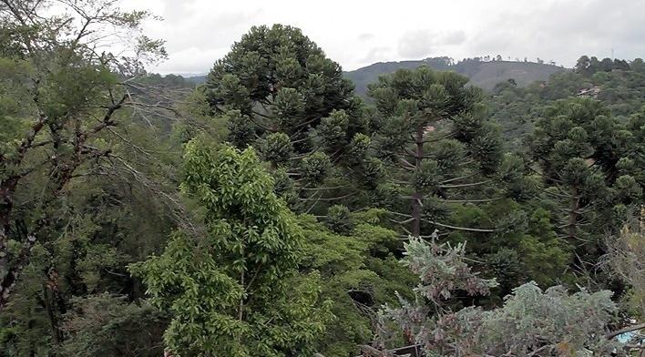 Paisagem de Monte Verde<br />Foto Helena Guerra