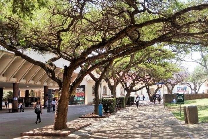 Campus da Universidade de Pretoria<br />Foto Maria Fernanda Derntl