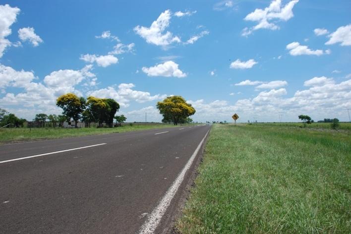 Argentina Peltophorum dubium na fronteira com o Brasil<br />Foto José Tabacow