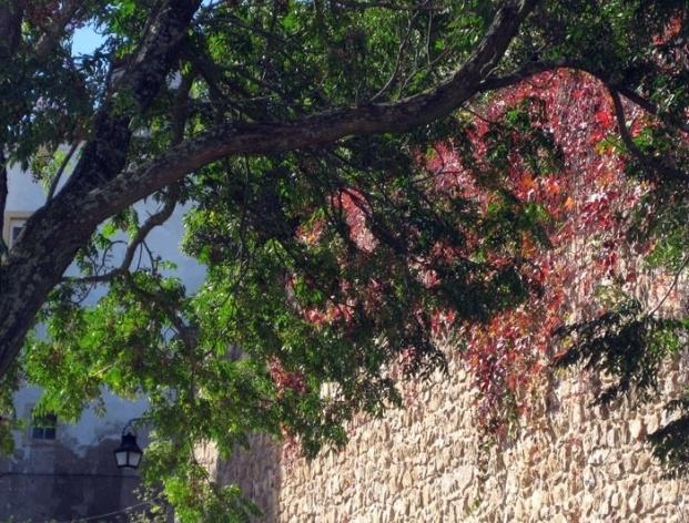 Muro de Évora<br />Foto Junancy Wanderley