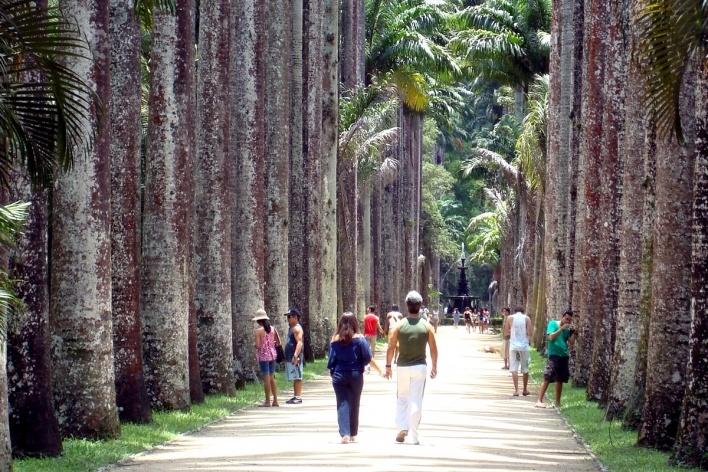 Aléia de palmeiras imperiais