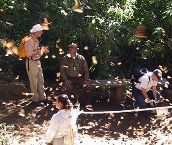 """Mexicanos no """"Santuário de la maripoza monarca""""<br />Foto Sandra Barone"""