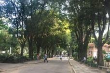 Calçadas, vegetação e controle térmico