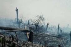 Desflorestamento e arquitetura