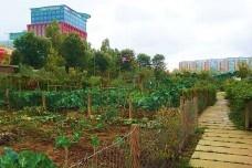 Hortas urbanas e paisagem
