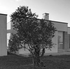 Casa na Cruz de Oliveira, 2ª fase, Benedita, Portugal. Arquiteto Pedro Fonseca JorgeFoto Marcos Paixão