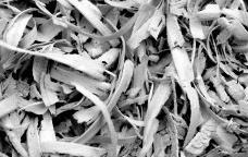 Virutas de maderaFoto Pixabay  [Creative Commons]