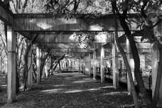 Área permeável no Parque da Juventude, São PauloFoto Abilio Guerra
