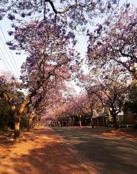 África do Sul, patrimônio moderno e regeneração urbana