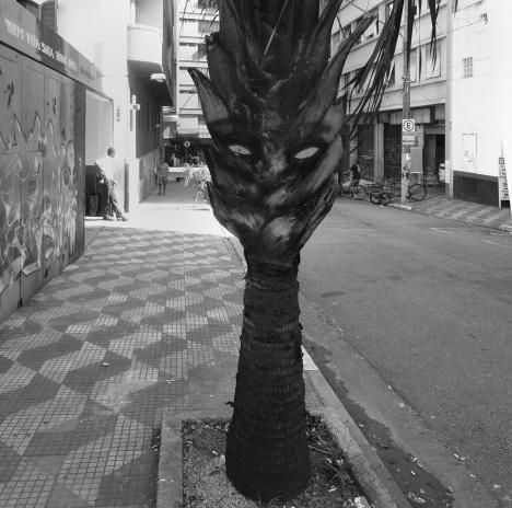 Palmeira com pequenos desenhos que simulam olhar de ser antropomórficoFotos Michel Gorski  [passe o mouse sobre a foto]