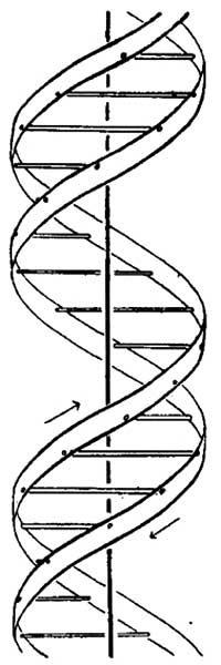 Desenho da estrutura molecular do DNA, publicado na revista Nature, em 1953, reproduzido em tamanho natural a partir de fac-símile publicado na revista Pesquisa Fapesp, em 2003