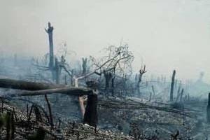 Desmatamento por queimada.  [World Rainforest Movement]