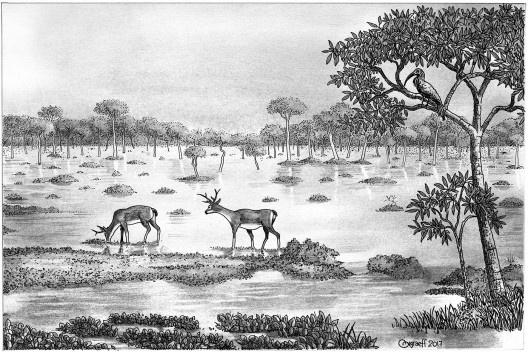 Paratudal na Região de Aquidauana, Pantanal<br />Desenho Orlando Graeff