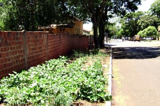 Cultivo de hortaliças em uma calçada de Munhoz de Mello/PR [Acervo das autoras, 2009]