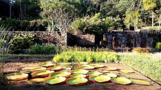 Jardins da Fazenda Vargem Grande. Paisagistas Roberto Burle Marx, Haruyoshi Ono e José Tabacow <br />Foto Guilherme Mazza Dourado, 2016