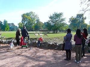 Crianças e adultos visitando e interagindo com animais no zoológico<br />Foto: Jovanka Baracuhy C. Scocuglia