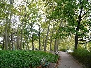 As margens do lago e as luzes do outono no Parc de la Tête d'Or<br />Foto: Jovanka Baracuhy C. Scocuglia