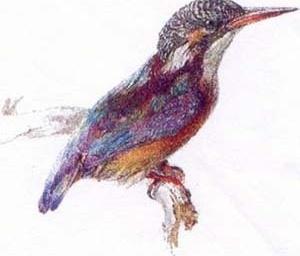 """Pássaro"", John Ruskin.  [Ruskin´s Drawing, Ashmolean Museum, Oxford, 1997, p. 43]"