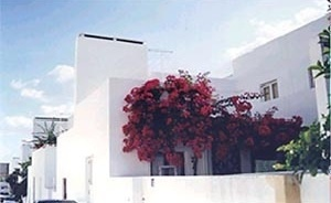 Fig.8 – Habitational unit: The coloring of the vegetation against the white paintwork is a factor of indivualization of the dwelling. Also, note the patio wall which is the same height as the front gate<br />Foto JAZ, 1997