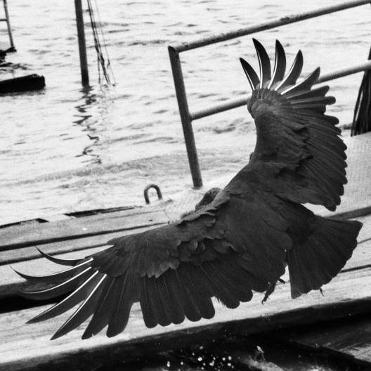 Área portuária na Amazônia (detalhe)<br />Foto Tommaso Protti