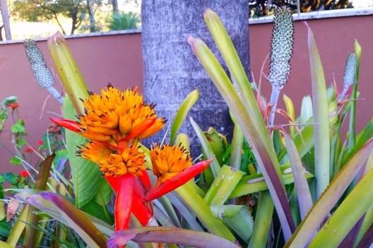 Residência Juscelino Kubistchek, jardim, Belo Horizonte. Paisagista Roberto Burle Marx<br />Foto Cêça Guimaraens